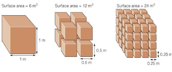 change of surface area with size