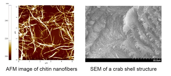 chitin nanofibers and crab shell structure