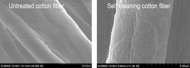 Scanning electron microscopy image of self cleaning cotton
