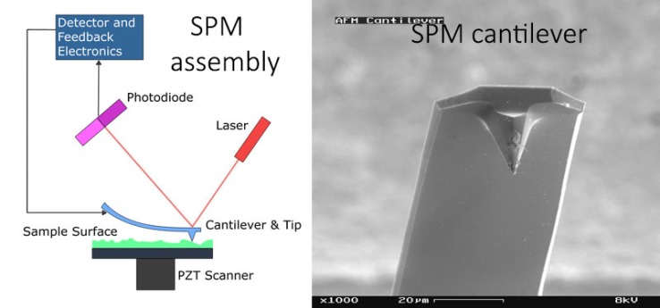 Scanning probe microscope in probing nanoscale with cantilever