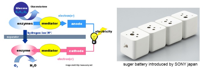 bio battery or sugar battery function