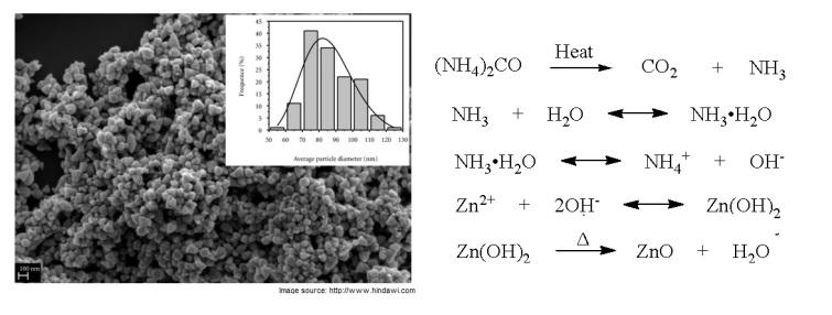 SEM image of prepared ZnO nanoparticles