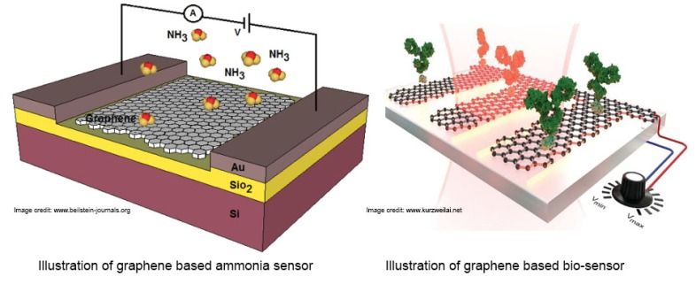 Gas and biomolecule detection using graphene